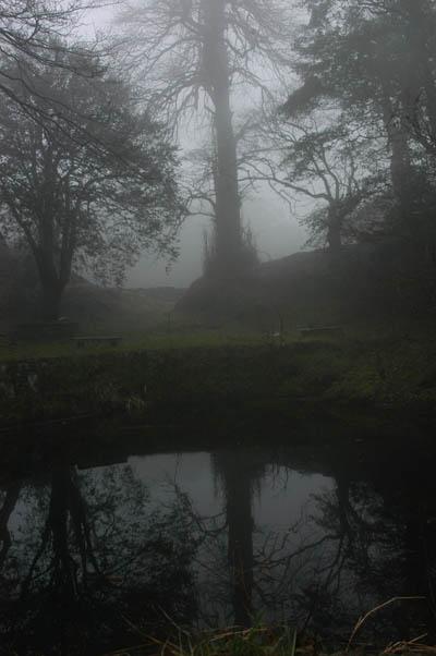 龍池旁的千年銀杏,見證過道安長老的住山苦行。